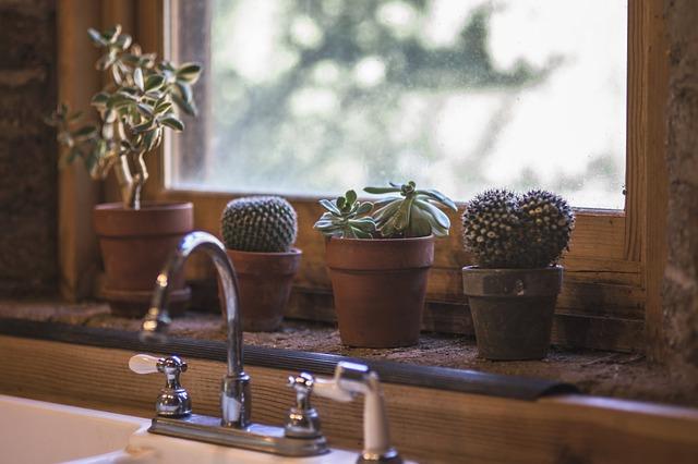 Sukulenty nebo kaktusy. Jak na jejich pěstování v pokojových podmínkách?